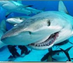 Акулы в Испании. Статистика и гастрономия.