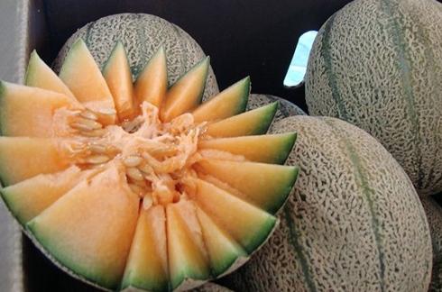 melon_7_cantalupa