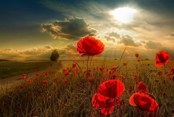 flowers_rus_111