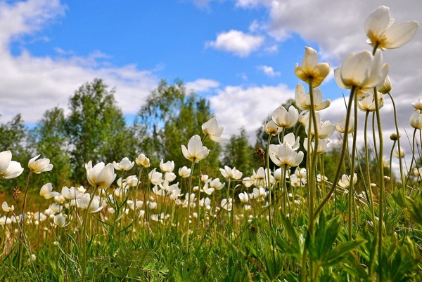 flowers_rus_6
