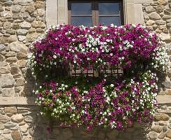 flowers_spain_02