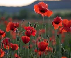 flowers_spain_04