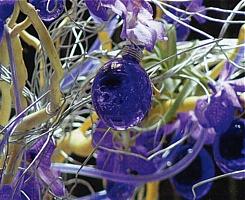 flowers_spain_13