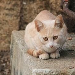 spain_cat_01