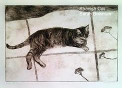 spain_cat_03