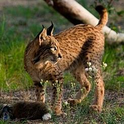 spain_cat_11