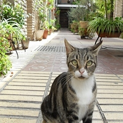 spain_cat_13