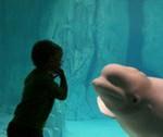Лучшие в мире аквариумы.