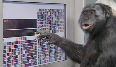 monkey_010