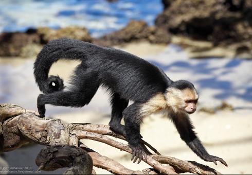monkey_011